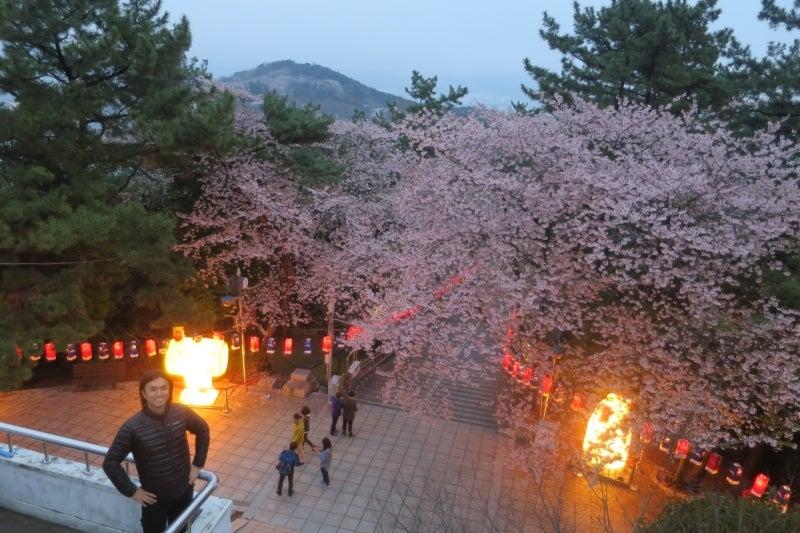 鎮海桜祭19