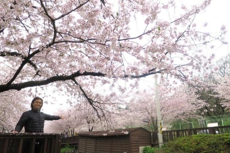 鎮海桜祭2
