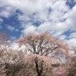 桜(中川村)