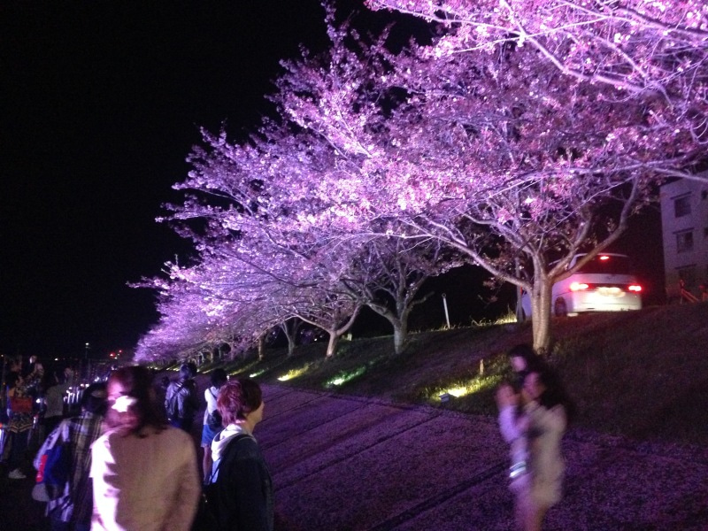 桜スマイルフェスタ15