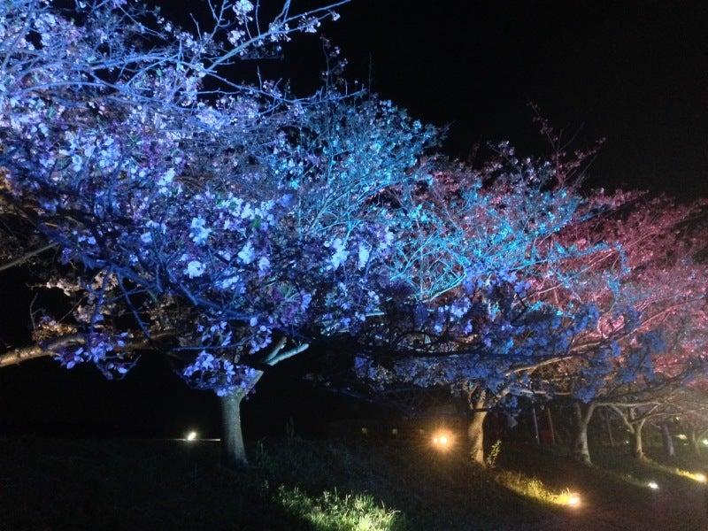 桜スマイルフェスタ11