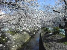2015 山崎川