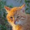 猫たちのこと、病気の画像