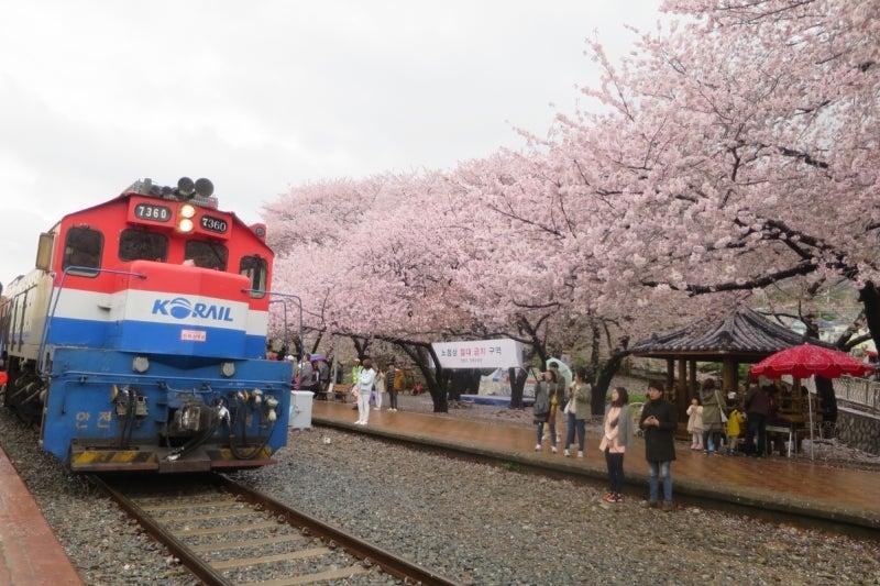 鎮海桜祭2-9