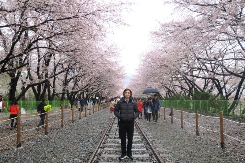 鎮海桜祭2-10