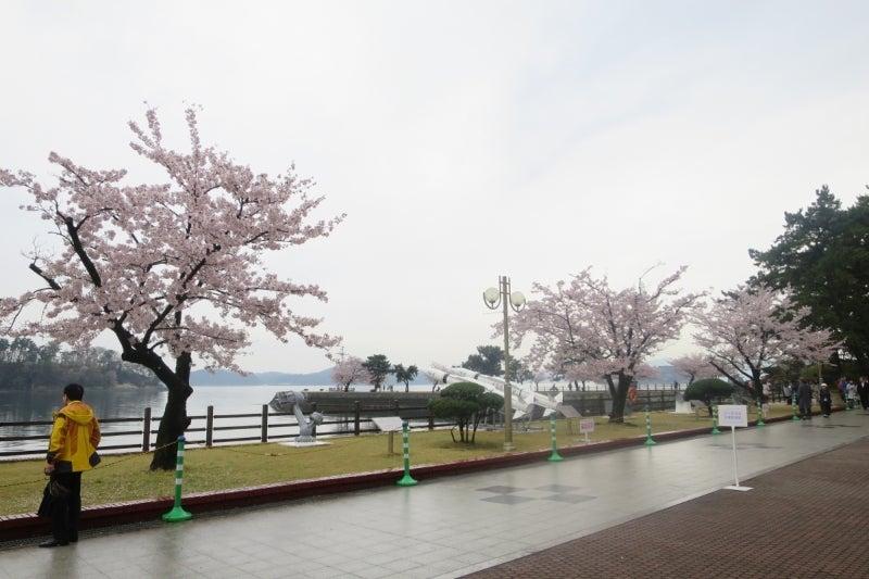 鎮海桜祭2-6