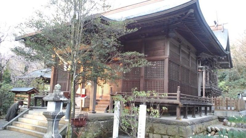 三ヶ所神社の旧本殿から見える本殿としだれ桜