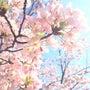 春るるる♡