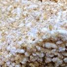 玄米麹の記事より