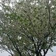 もうひとつの桜。