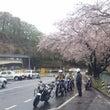 今年も春が来ました!…