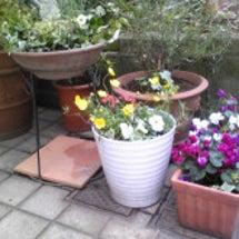 春らしく・・・・