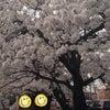 お花見しました.。.:*♡の画像
