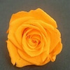 オレンジの画像