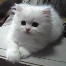 猫の性格は顔の輪郭で…