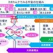 カタカムナ研究会レポ…