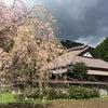 桜も…の画像