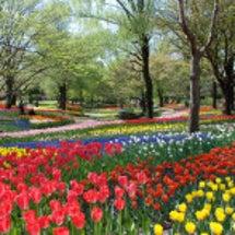 昭和記念公園のチュー…