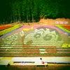 兵庫県の但東町チューリップ祭りに来てます今年のチューリップアートはクレヨンしんちゃんですの画像