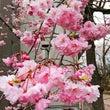 春も終わり