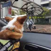 4月兵庫コーギーズ