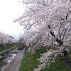 春。の画像