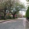 桜から藤へ!の画像