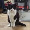猫とストーブの画像