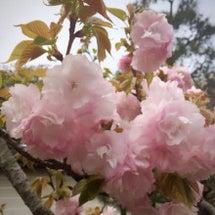 続きのお花見と御朱印…