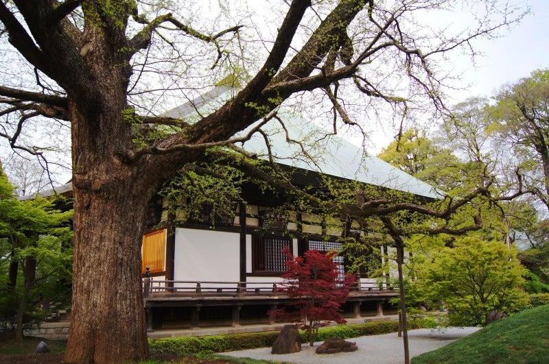 ⑩新緑浄真寺