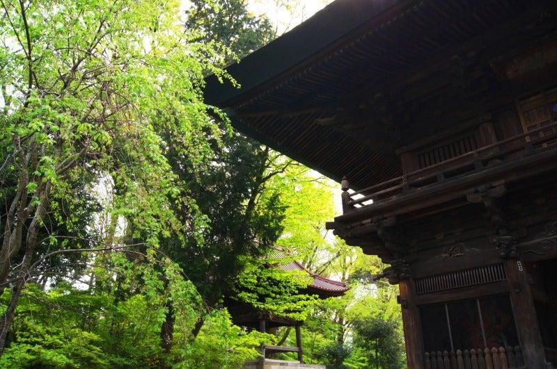⑥新緑浄真寺