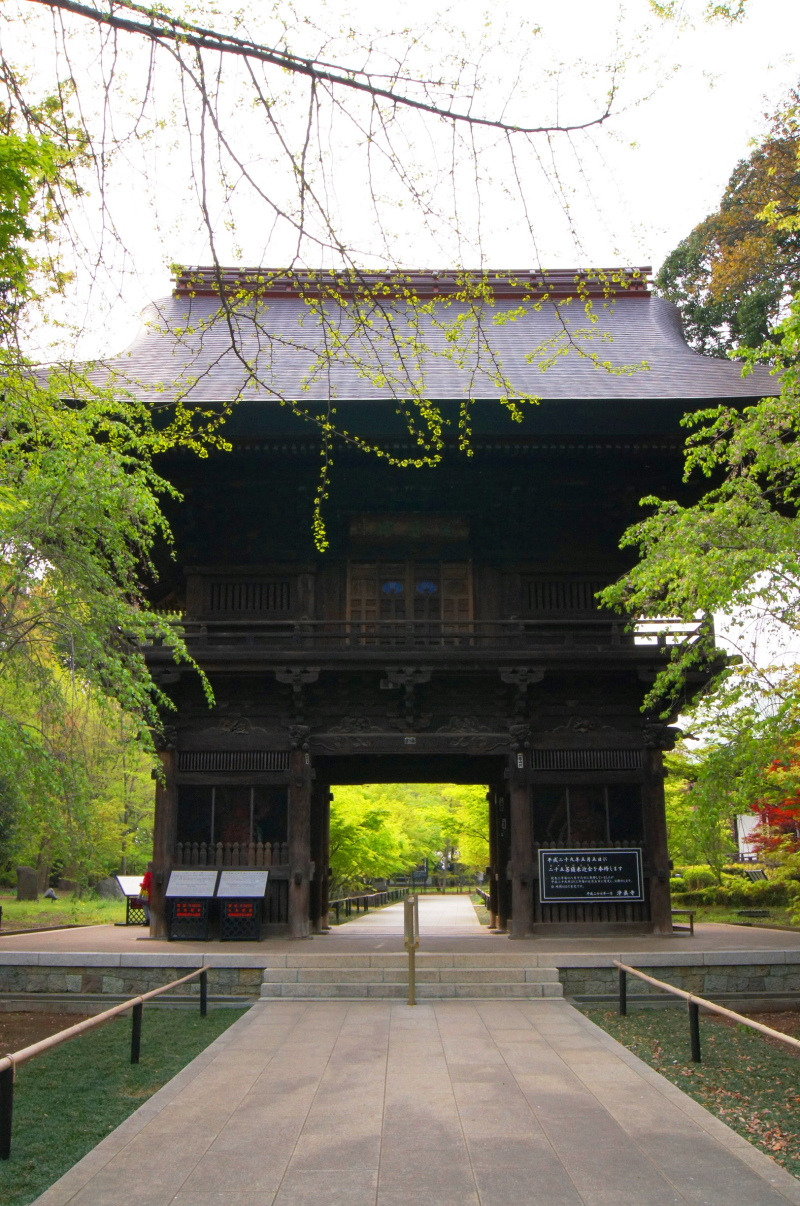 ④新緑浄真寺