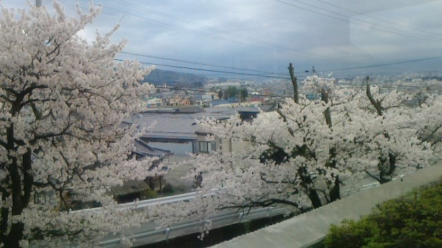 桜が満開の松本市内