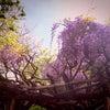 春〜初夏の出演情報の画像