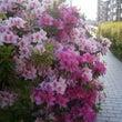 麻の散歩道花が綺麗だ…