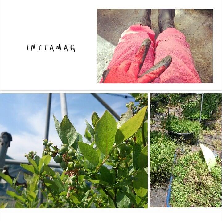 農家 の 嫁 ブログ 農家 働くヒト - 人気ブログランキング