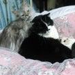 寝たきりと猫の日々