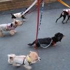 明日は富士マリンプールで保護犬会♪の記事より