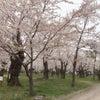 GW♡お花見の画像
