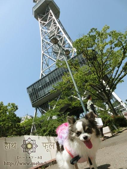 チワワとテレビ塔