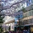 大崎で桜を見ながら