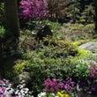 【2015年春の花】…