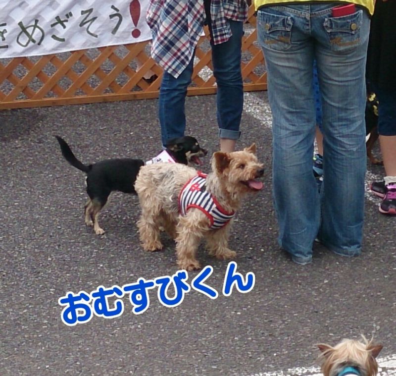 5月4日GO!保護犬GO、保護犬の会♪の記事より