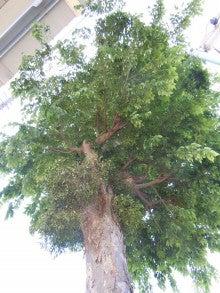 京王高架下宿り木