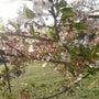 4月の色々♪