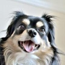 柊太朗君 笑って犬友…