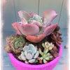 多肉植物*リメ鉢に寄せ植えの画像