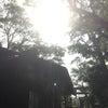 今月の御礼参り〜神社ミッション⑥〜の画像