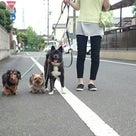 アサ通信③  キャリー生活 と お散歩の記事より
