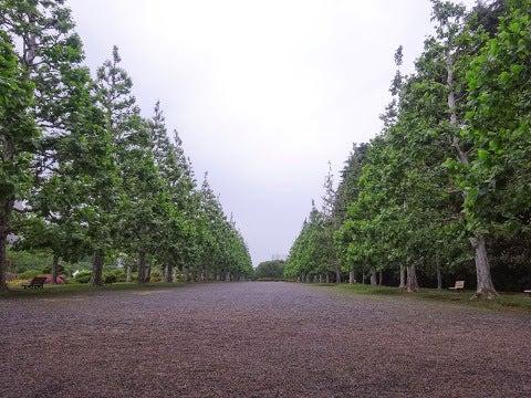 プラタナス並木,フランス式庭園,新宿御苑〈著作権フリー無料画像〉Free Stock Photos
